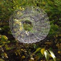 Осенняя паутина :: Анатолий