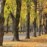 осень... :: Елена Лабанова