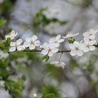 Цветочный хоровод-537. :: Руслан Грицунь