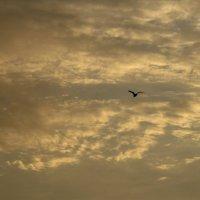 Одинокая чайка :: Анастасия Петрова