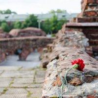 Руины Белого дворца :: Вячеслав Х.