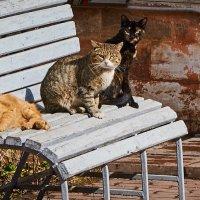 Три девицы под окном..... или как бабульки у подъезда :: Андрей Крючков