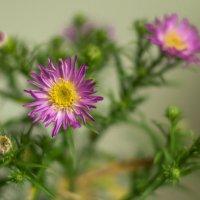 Этюд с цветком 2 :: Виталий