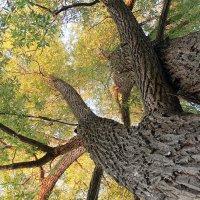Большое дерево :: Владимир Красевский