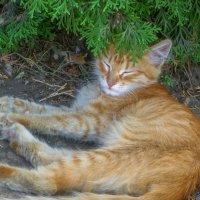 Кот рыжий вокзальный... :: Юлия Бабитко