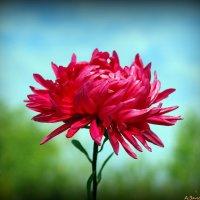 Осенние цветы :: Андрей Заломленков
