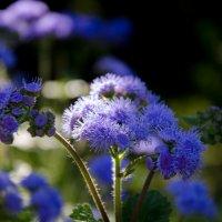 цветочки:) :: Влад Римский