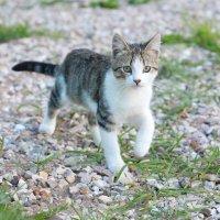 Монастырский кот :: ira