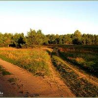 Две дороги, два пути.. :: Антонина Гугаева
