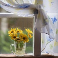 Цветы на окне :: Елена