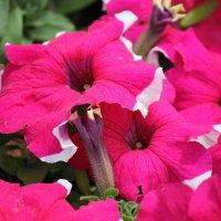 Цветочный хоровод-548. :: Руслан Грицунь