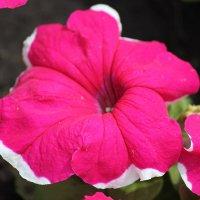 Цветочный хоровод-547. :: Руслан Грицунь