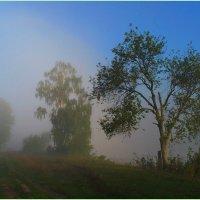 Утренний туман. :: Владимир Михайлович Дадочкин