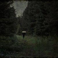 В лесу :: Caша Джус