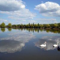 Сельский пруд :: Nina Streapan