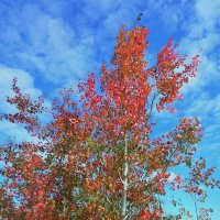 Уже Осень... :: Schbrukunow Gennadi