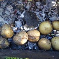 Картошка на углях :: BoxerMak Mak