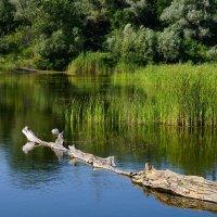 Зарастает озеро :: Игорь Сикорский