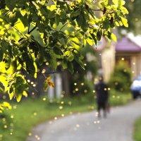Золатая осень :: Краснов  Ю Ф