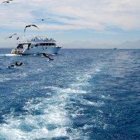 Морская прогулка :: Olga Golub