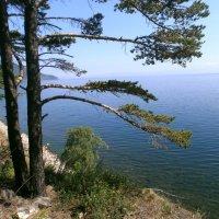 Берег Байкала :: aksakal88