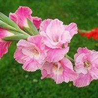 Цветы лета. :: Юрий Шувалов
