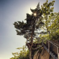 И на камнях растут деревья. :: Евгений Подложнюк