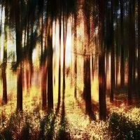 солнца свет :: Лара Leila