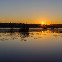 Утро на озере :: Николай Николенко