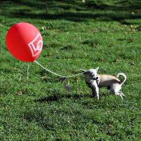 Собачка и шарик.. :: Larisa Ulanova