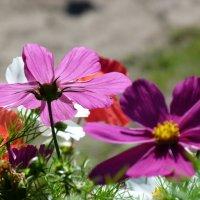 Свет и цветы :: Юрий Медведев