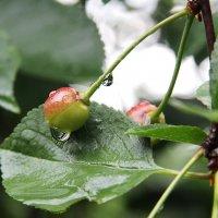 А просто летний дождь прошел ..... :: Маргарита ( Марта ) Дрожжина