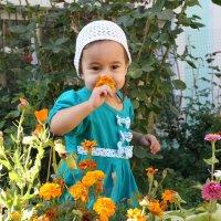 цветы среди цветов :: Марат Номад