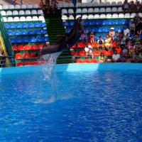 Летающий дельфин :: Алексей Симаков