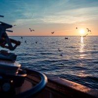 чайки на закате :: Николай Леммер