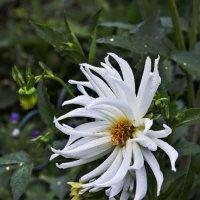Белый цветок :: Анатолий Иргл