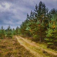 Сентябрьским днём в лесу :: Ирина Никифорова