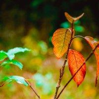 И снова осень! :: Ирина Никифорова