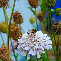 последний цветок :: Елизавета Белянина