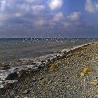 Чайки над морем :: Константин Николаенко