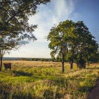 Теплое лето :: Алина Гриб