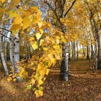 Осень. Любимая роща :: Борис Гуревич