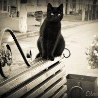 Советский кот :: Natalisa Sokolets