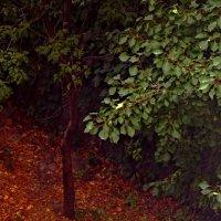 Одинокое дерево :: Кристина Элбакян