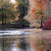 Чаровница осень :: ирина Пронина