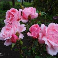Утро в саду.. :: Антонина Гугаева