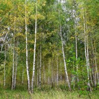 Осень вступает в свои права. :: Борис Митрохин