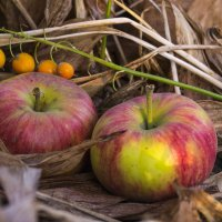 Осенние яблоки :: catonbox