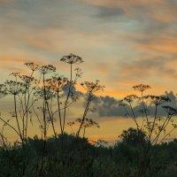 До восхода солнца :: catonbox