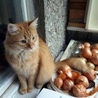 Персик с луком :: Елена Федотова